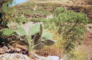 Accha - Cusco