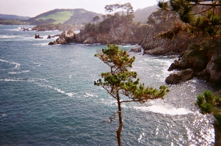 Point Lobos_10 copy