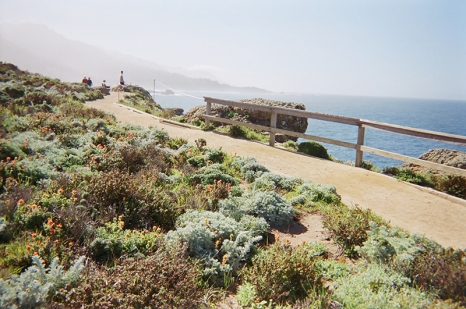 point-lobos5-copy