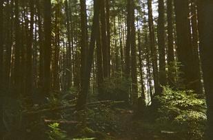 whistler_woods_bc_