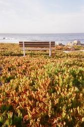 Monterey_00 copy