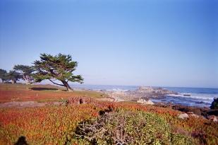 Monterey_07 copy