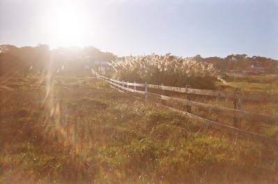 Monterey_16 copy