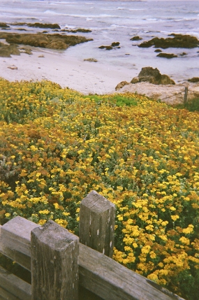 Asilomar Beach_12 copy