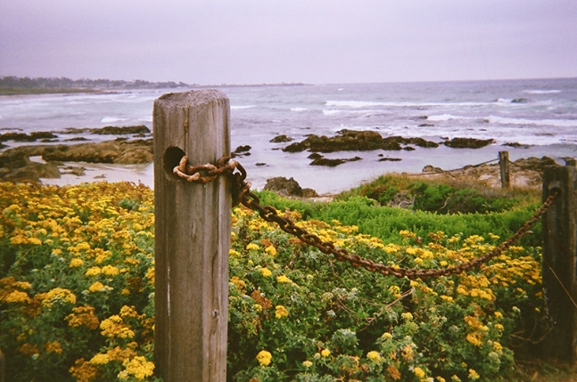 Asilomar Beach_13 copy
