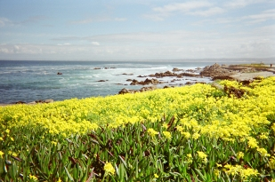 Pacific Grove_17 copy