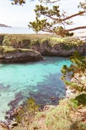 Point Lobos_01 copy