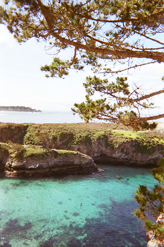 Point Lobos_02 copy