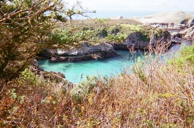 Point Lobos_04 copy