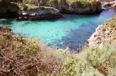 Point Lobos_05 copy