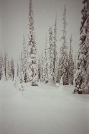 BaldfaceTrees-Brad copy
