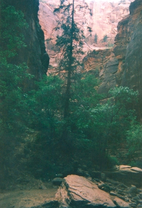 14.19.08.2018 - Zion National Park (Utah) copy