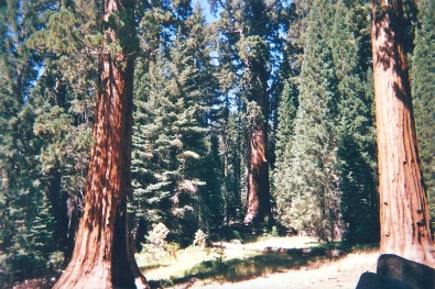 16. 21.08.2018 - Sequoia & Kings Canyon National Park (California) copy