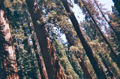 17. 21.08.2018 - Sequoia & Kings Canyon National Park (California) copy