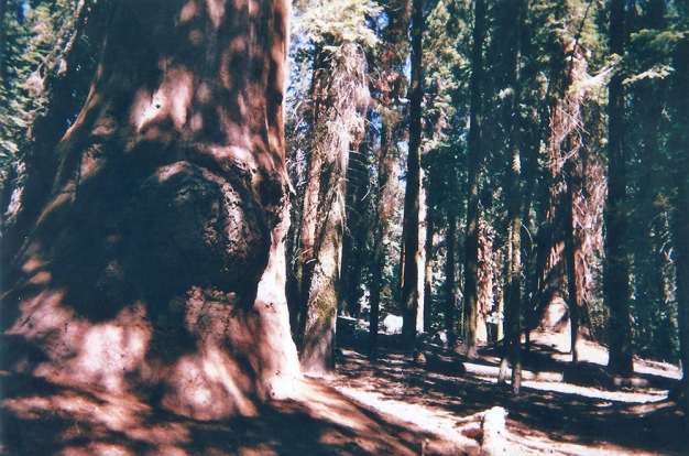 19. 21.08.2018 - Sequoia & Kings Canyon National Park (California) copy
