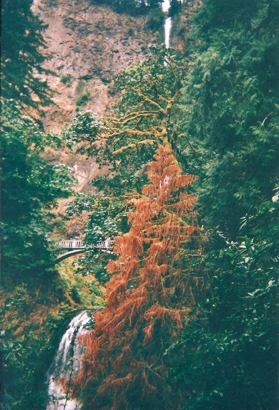 5.25.8.2018 - Multonomah Falls, Columbia River Gorge - Oregon copy