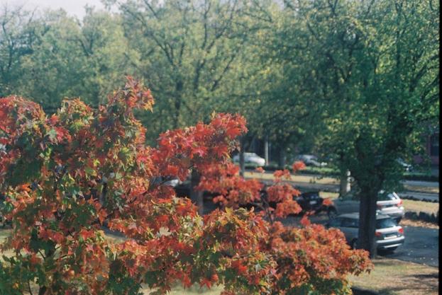 AutumnTree copy