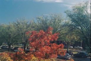 AutumnTreeSky copy