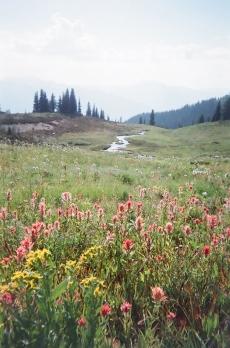 FloralFields_SkylineRidge_BC copy