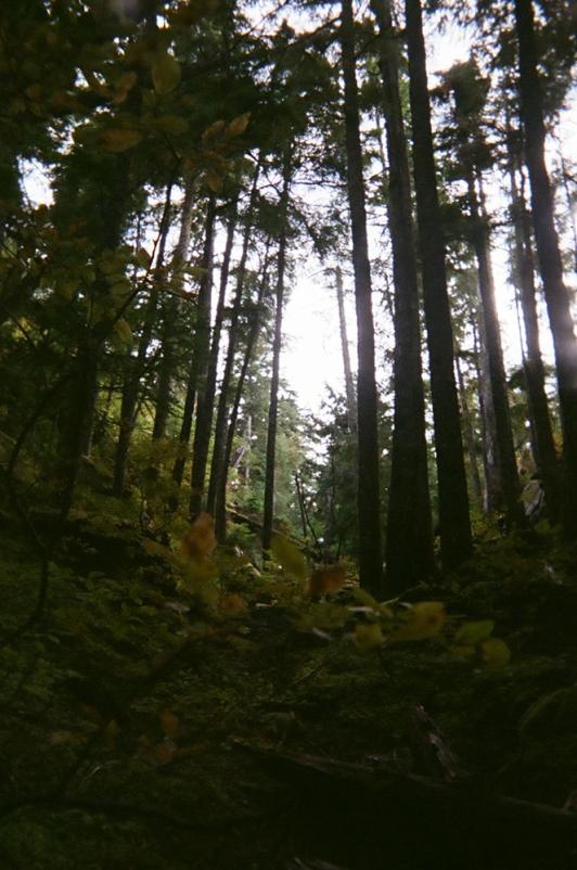Forest-SeatoSummit_Squamish copy