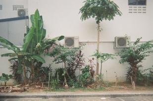 Nurashik_Kodak800_19 copy