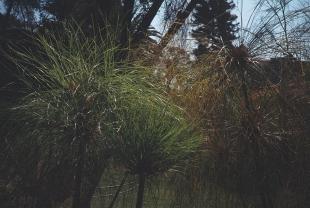 Photo36_2 copy