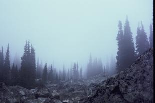 20191106-treefrendo_film-017 copy