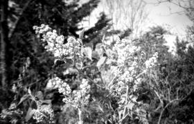 135-209_FP4_Sardina_004 copy
