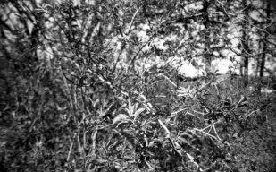 135-209_FP4_Sardina_017 copy